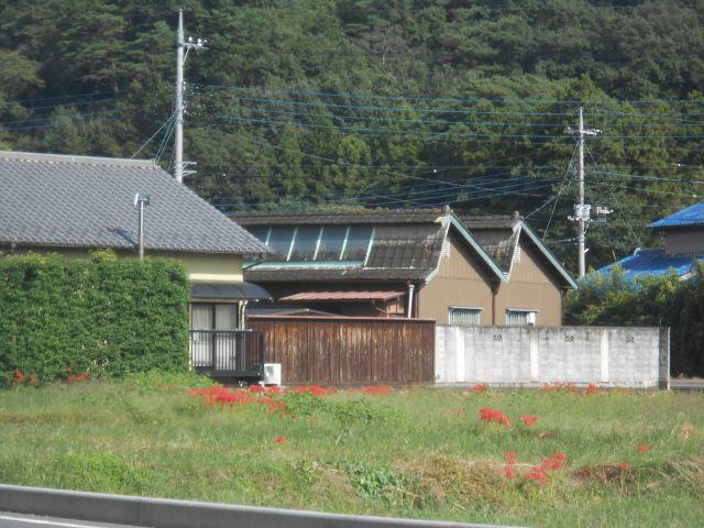 nokogiri_tamago_2.jpg