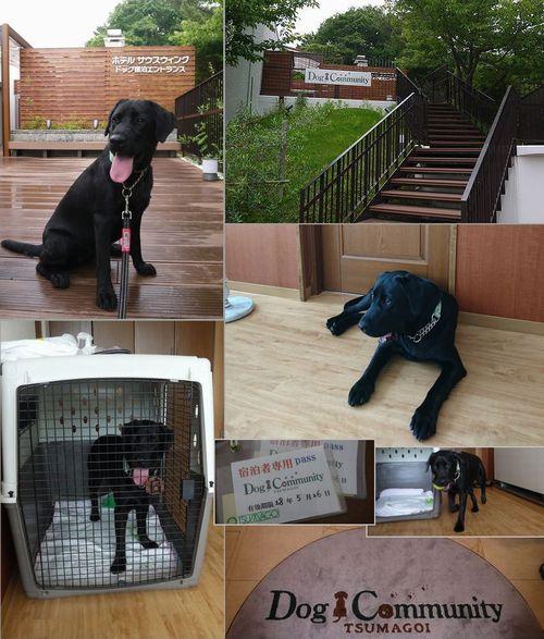 20160525 P1150207 DogCommunity
