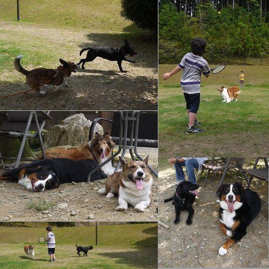 20160611 P1150494 popdog-1