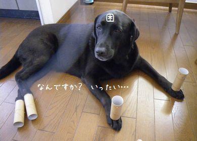 20090913 なっちゃん
