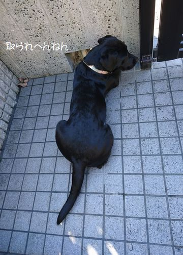 20161104 DSC_2679-1