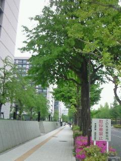 NEC_3613.jpg