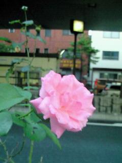 NEC_3842.jpg