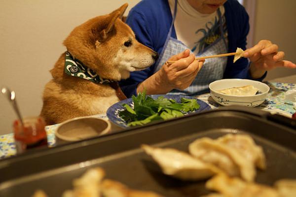 ちょうだいちょうだい、食べたい食べたい