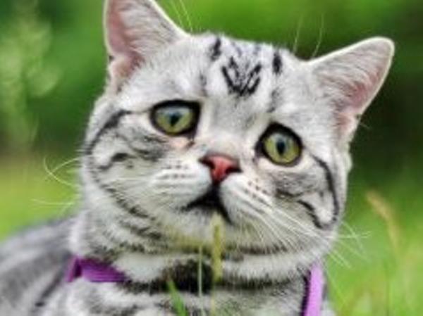 猫踏んじゃったじゃね~ぞ、コラ~