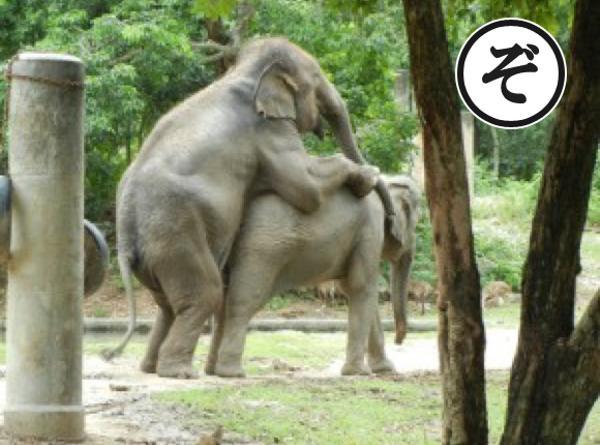 象さん増産中