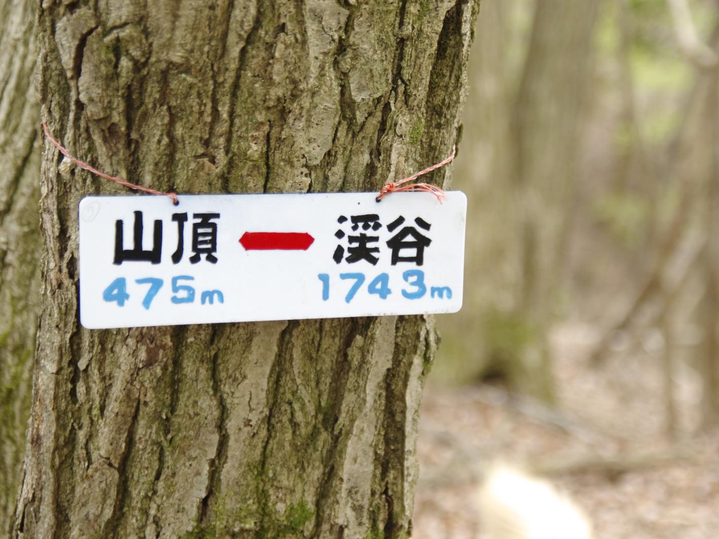_GOR0341b.jpg