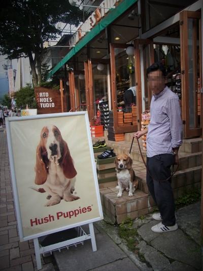 20160825看板犬
