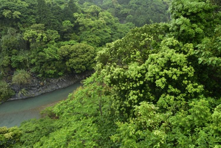 水辺の萌える森4