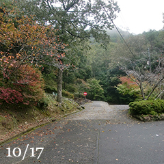 秋めいてきた散歩道