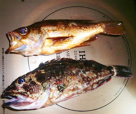 10月の釣り