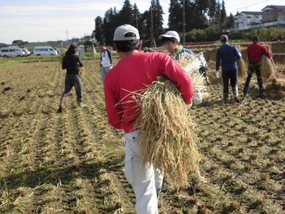2016稲刈り