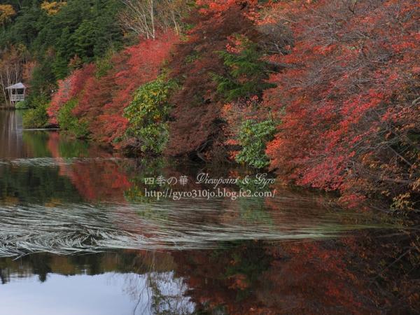 白駒の池 D