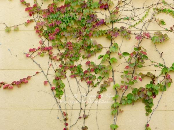 花菜ガーデン E