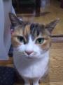 愛猫:2016.04.26