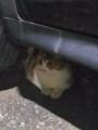 愛猫:2016.06.19