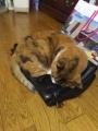 愛猫:2016.05.11