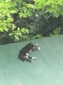 愛猫:2016.04.23