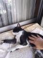 愛猫:2016.05.04