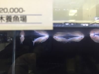 白幹之鉄仮面