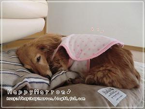 着る毛布の季節1