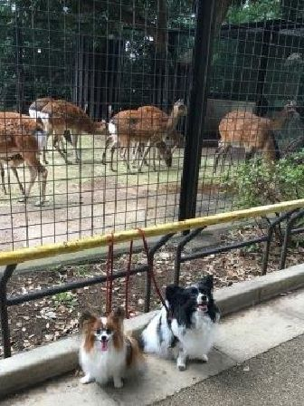 鹿さんの前で!