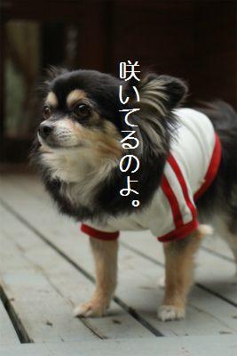 IMG_2696_20161026232912c46.jpg