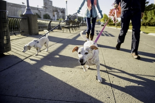 Tetsuhiro-Sachiko-Dogs-in-Montreal_1 (500x333)