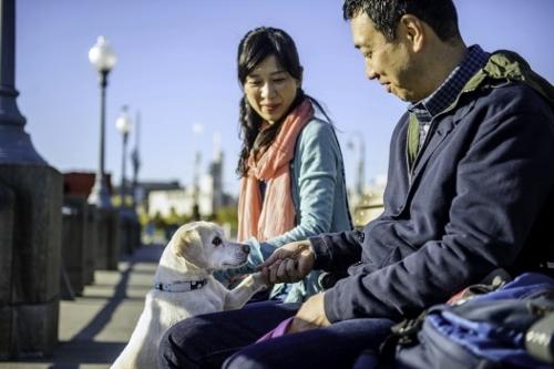 Tetsuhiro-Sachiko-Dogs-in-Montreal_3 (500x333)