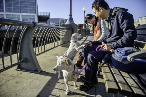 Tetsuhiro-Sachiko-Dogs-in-Montreal_4 (500x333)