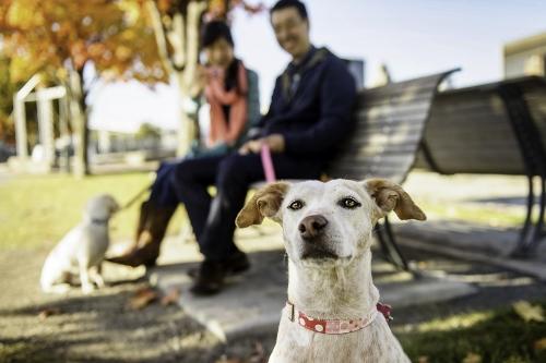 Tetsuhiro-Sachiko-Dogs-in-Montreal_9 (500x333)