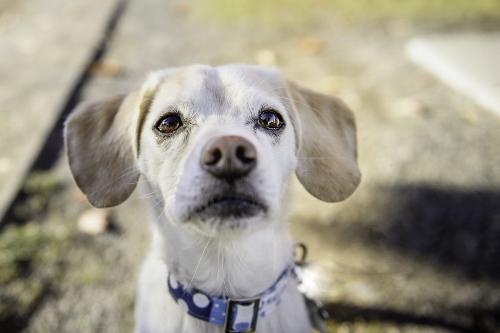 Tetsuhiro-Sachiko-Dogs-in-Montreal_10 (500x333)