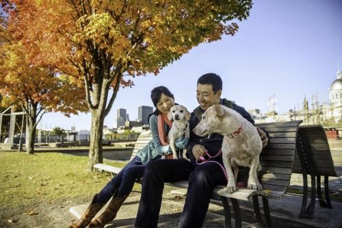 Tetsuhiro-Sachiko-Dogs-in-Montreal_12 (500x333)