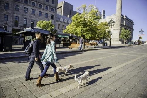 Tetsuhiro-Sachiko-Dogs-in-Montreal_16 (500x333)