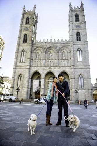 Tetsuhiro-Sachiko-Dogs-in-Montreal_20 (333x500)