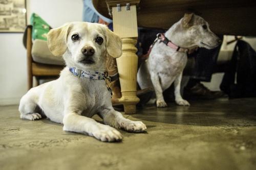 Tetsuhiro-Sachiko-Dogs-in-Montreal_25 (500x333)
