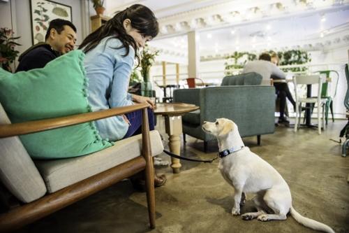Tetsuhiro-Sachiko-Dogs-in-Montreal_28 (500x333)