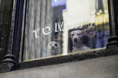 Tetsuhiro-Sachiko-Dogs-in-Montreal_32 (500x333)