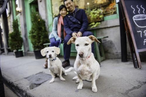 Tetsuhiro-Sachiko-Dogs-in-Montreal_35 (500x333)