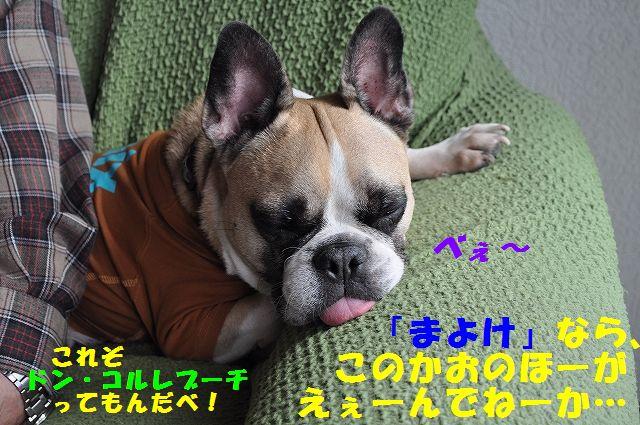 DSC_0205_20161019093625398.jpg