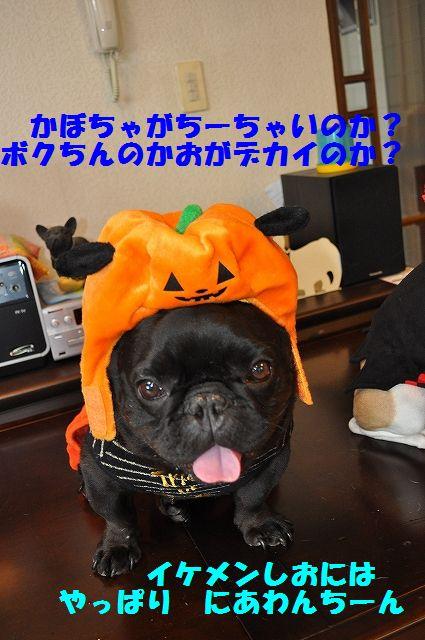 DSC_0238_20161101130819464.jpg