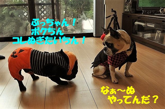 DSC_0274_20161101150021e42.jpg