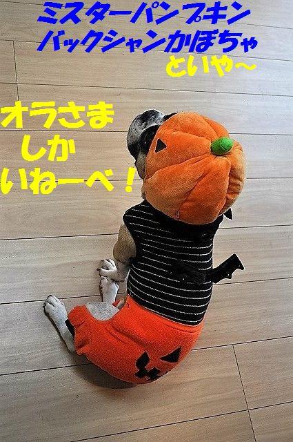 DSC_0287_2016110114400438b.jpg