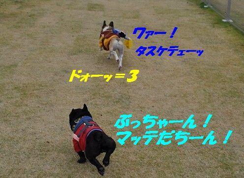 DSC_0328_201611021552519b6.jpg