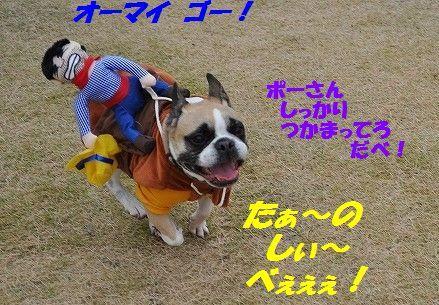 DSC_0330_20161102155252dcd.jpg