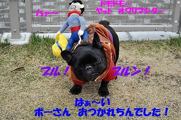 DSC_0336_201611041106237d9.jpg