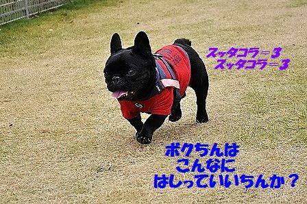 DSC_0339_2016110413223691a.jpg