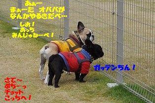DSC_0344_20161104134237eac.jpg