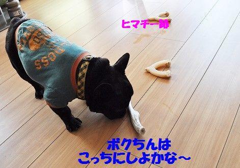DSC_0390_20161108103124a2b.jpg
