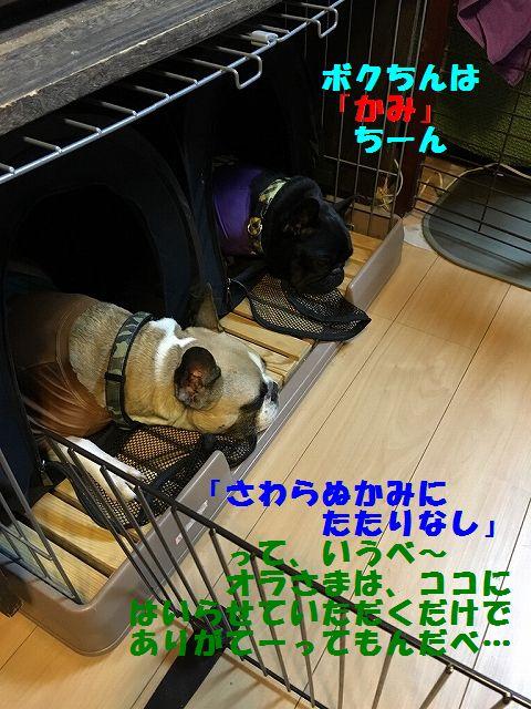 IMG_8482_201610201038180bd.jpg